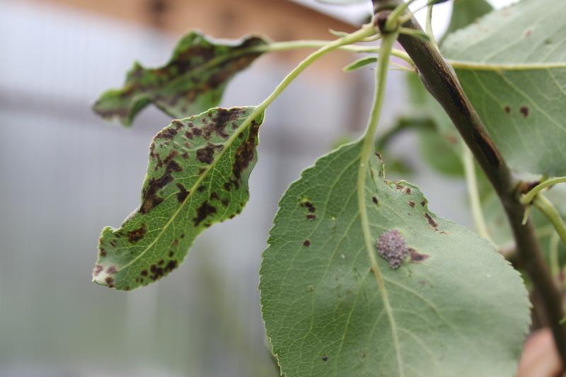 Болезни растений при которых требуется химическая защита
