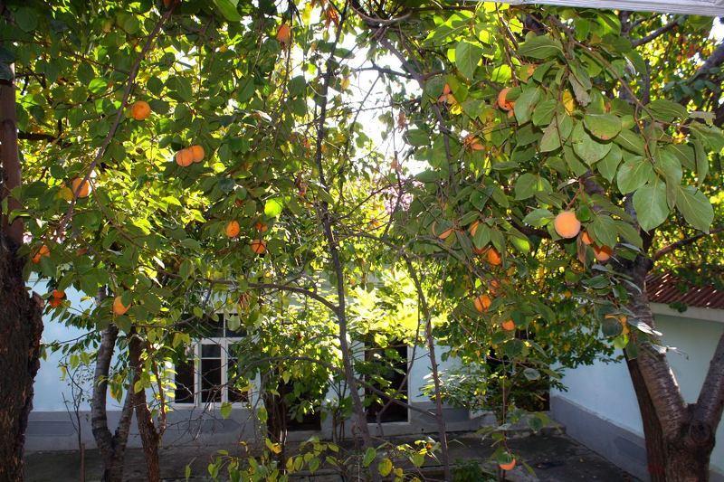 Хурмовый сад