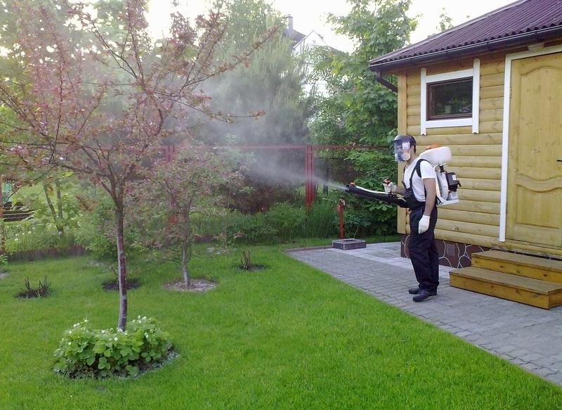 Опрыскивание сада от вредителей и болезней, обработка химической защитой