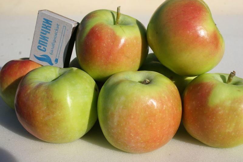Сорта яблок фото с описанием синал орловский
