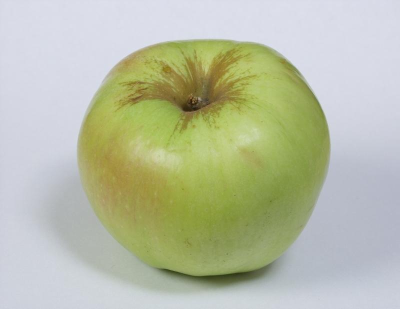 Яблони сорта с фото - пепин шафранный