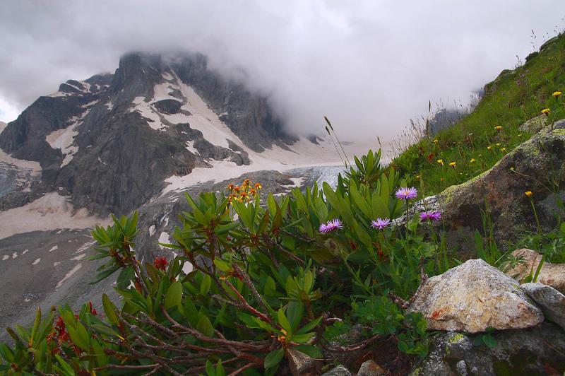 Происхождение, естественная среда обитания рододендрона в уральских горах