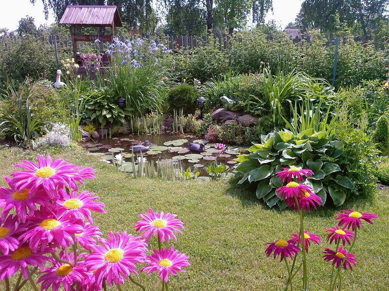 Фото многолетних цветов для сада огорода
