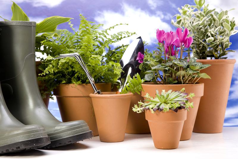 Садоводство и огородничество на Урале