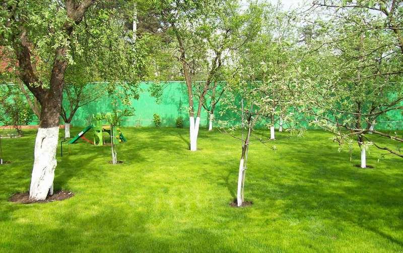 Обработка сада весной от вредителей и болезней