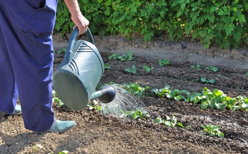 Опрыскивание сада ранней весной - внесение удобрений с поливом