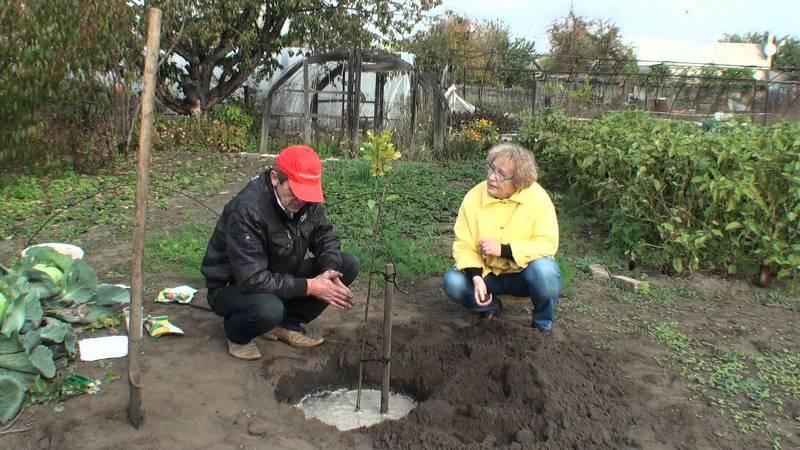 Подкормка яблонь весной - выбор удобрения