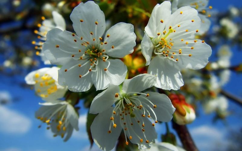 подкормка яблонь весной чем и как подкормить до цветения схема удобрения
