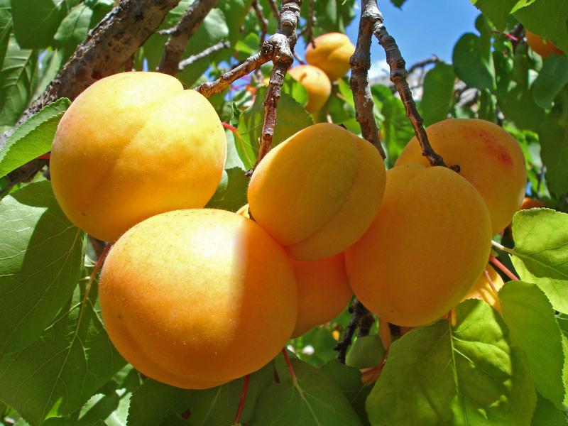 Уход за персиком весной, особенности и главные