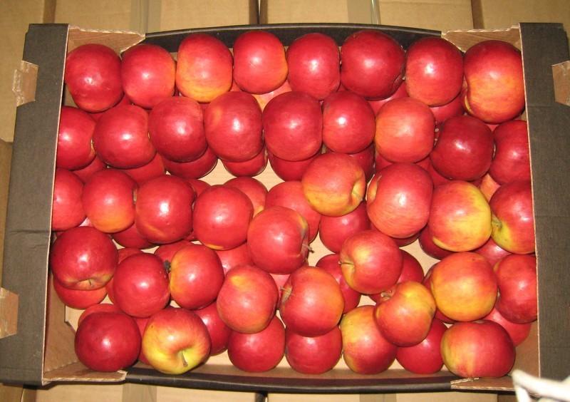 Как хранить яблоки зимой: яблоки в воске