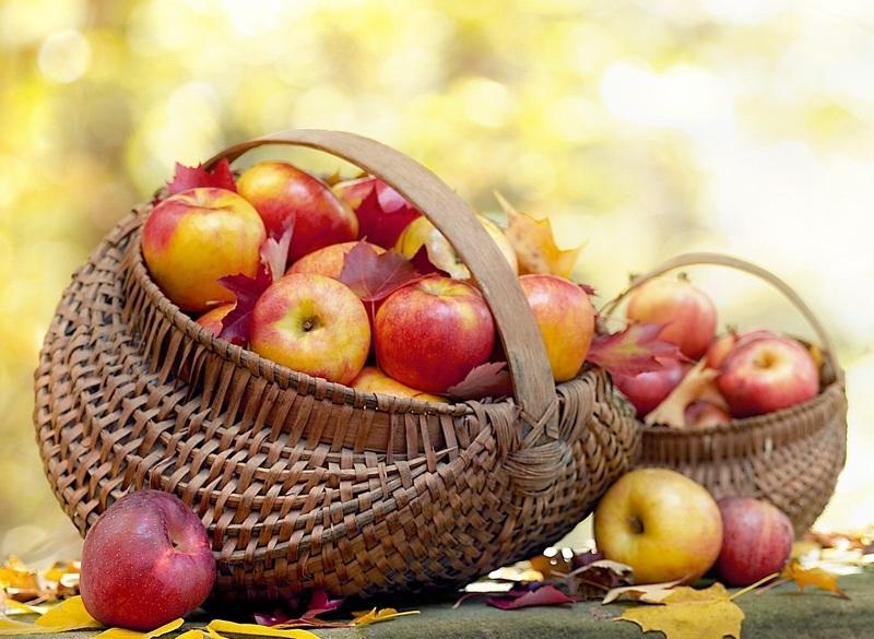 Как хранить яблоки, яблоки в корзине фото
