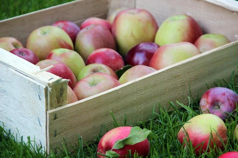 Как хранить яблоки в ящиках