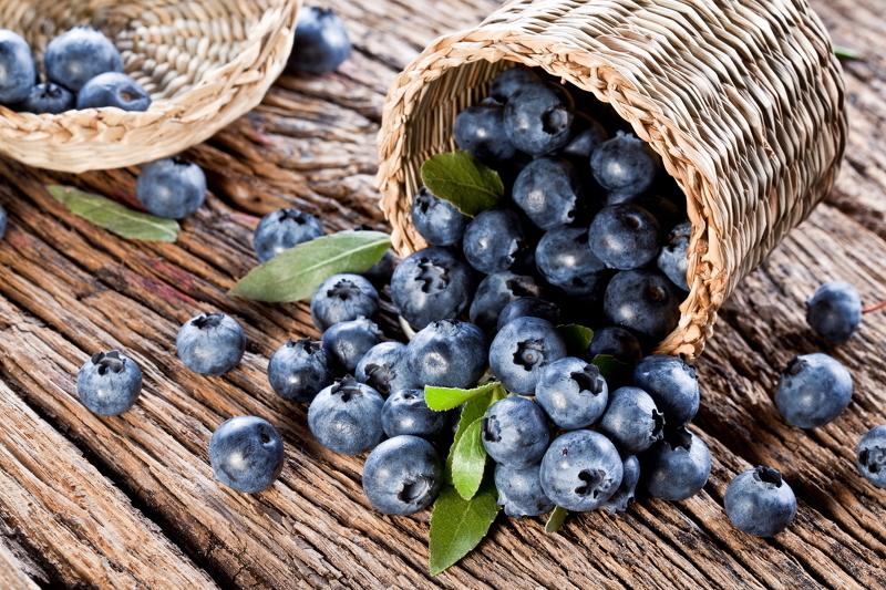 Черника полезные свойства – сбор ягод