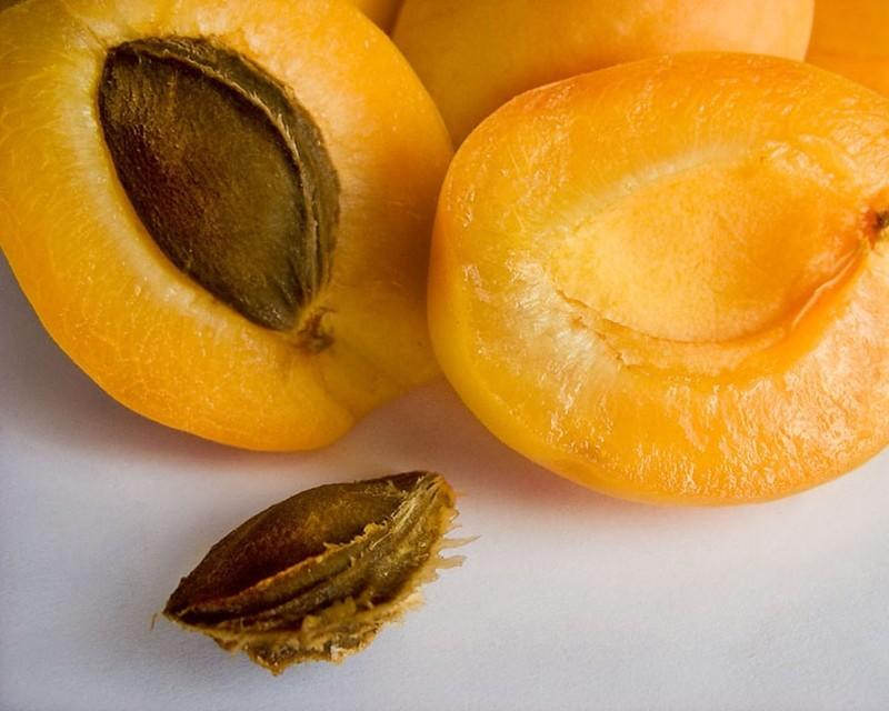Слива желтая сорта - Яичная