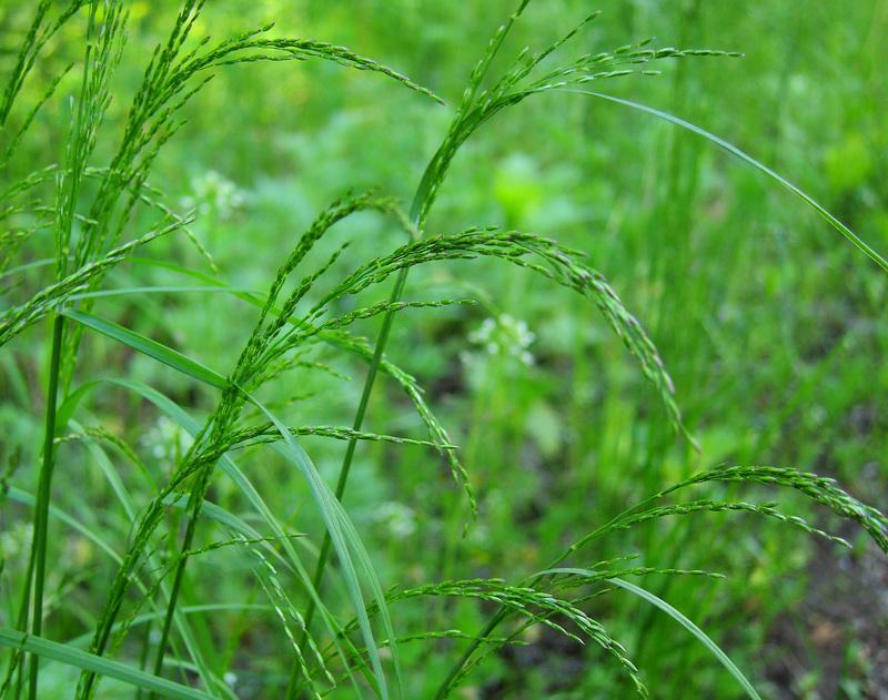 как травами избавиться от паразитов