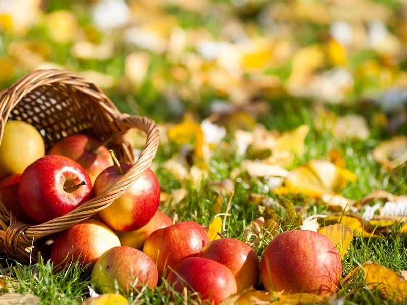 Осенняя обработка сада от вредителей  Сады Сибири