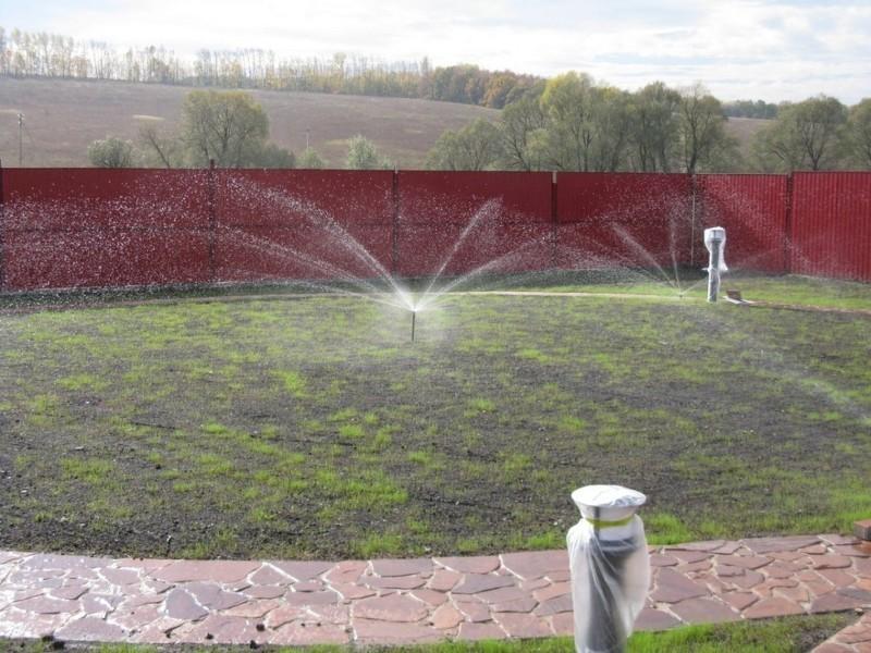 Как правильно посеять газонную траву: уход и полив