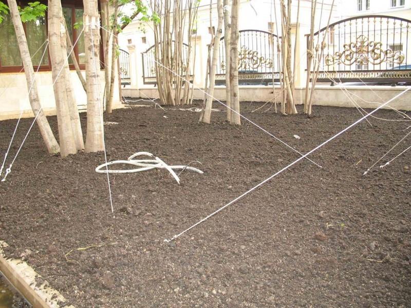 Как посадить газон: подготовительный этап