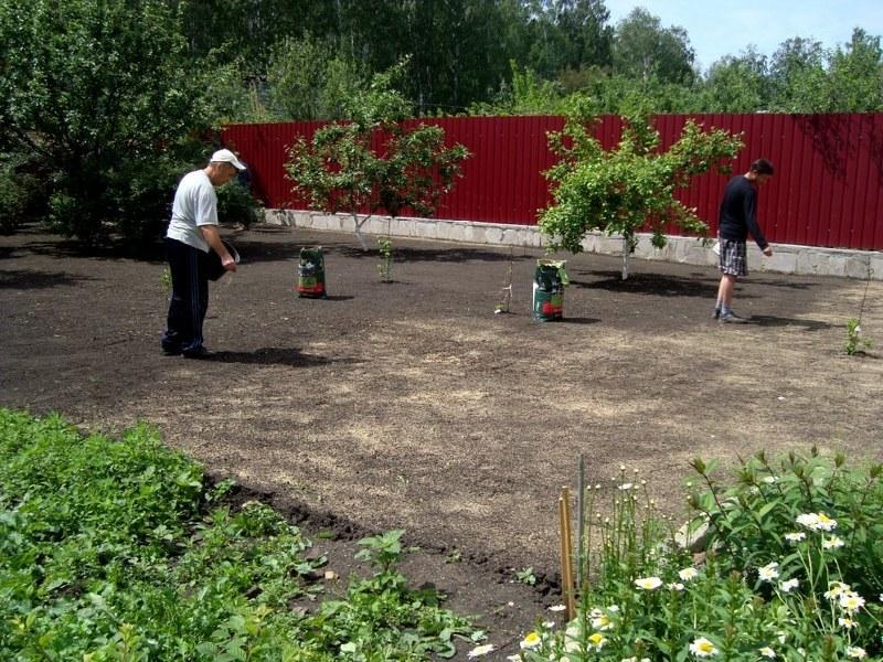 Как сажать газонную траву: выбор смеси