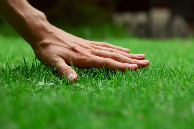 Как правильно посеять газонную траву