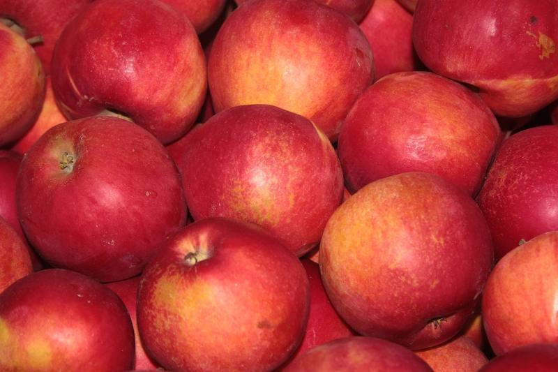 Яблоки сорта джонатан фото