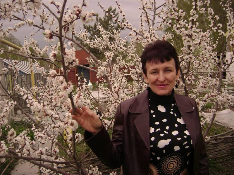 Сорта вишни для сибири: Загребинская