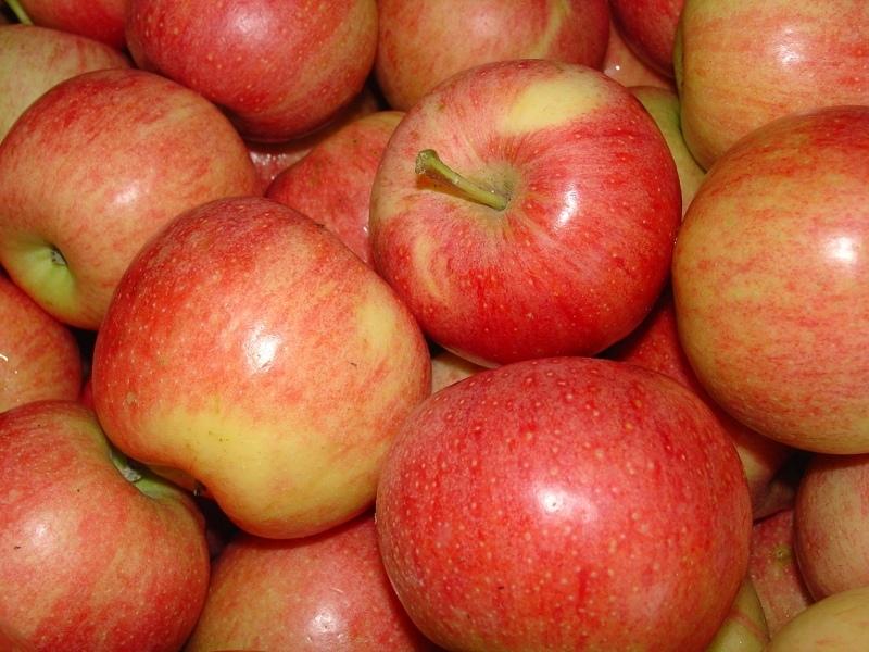 Яблоня мельба отзывы садоводов