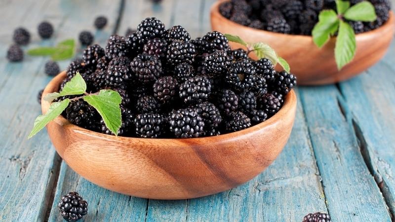 Ежевика - полезные свойства и противопоказания ягоды и листа