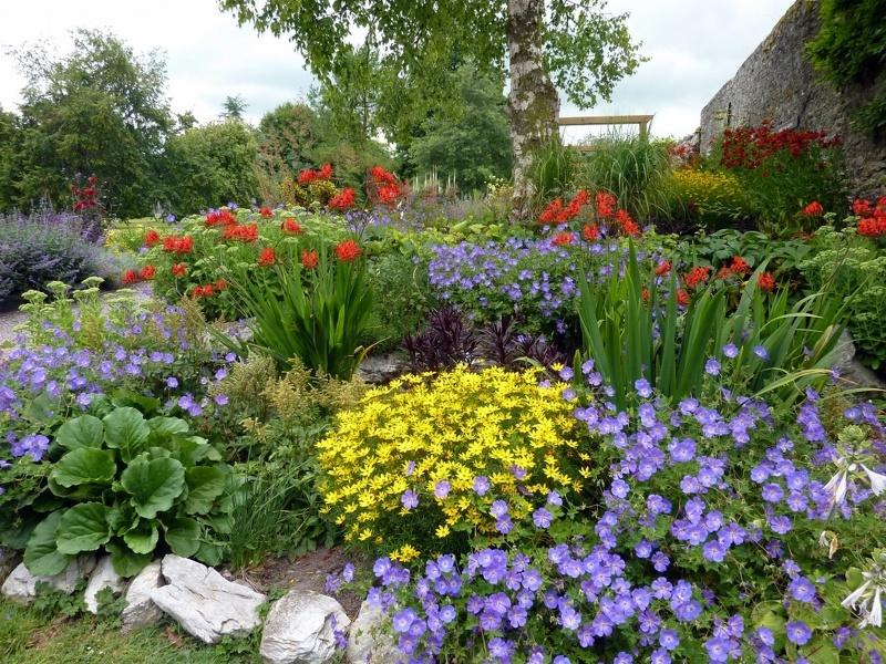 Цветы сада и для дачи