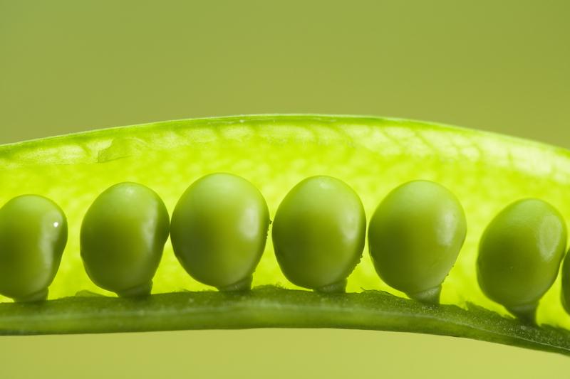 Состав зеленого горошка