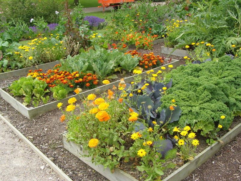 Совместимость растений и овощей при посадке в огороде