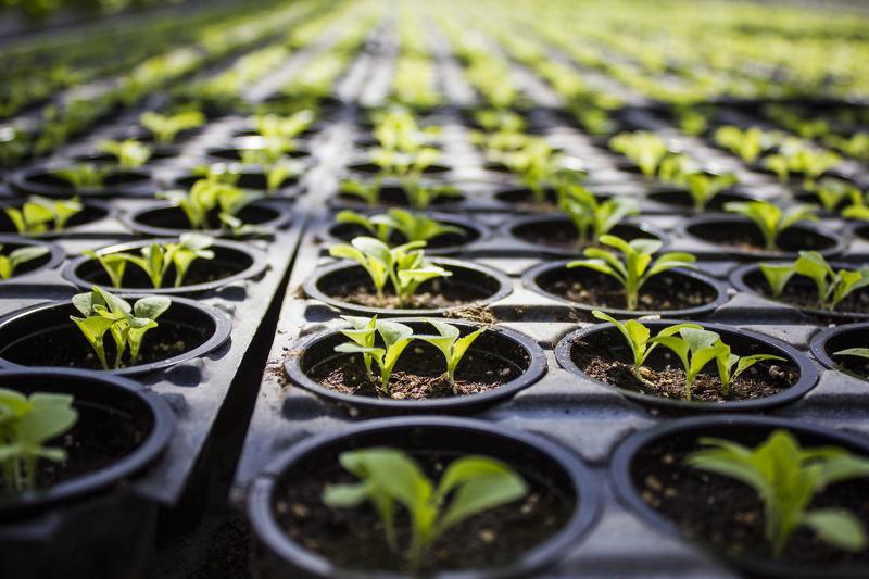 Продажа семян и рассады 129