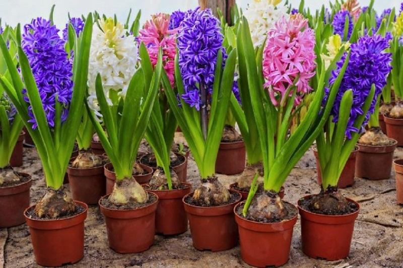 Выращивание растений подарок на 8 марта доставка цветов в лесосибирске