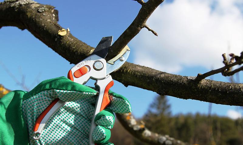 Обрезка яблони весной, зимой, осенью и летом: как обрезать правильно