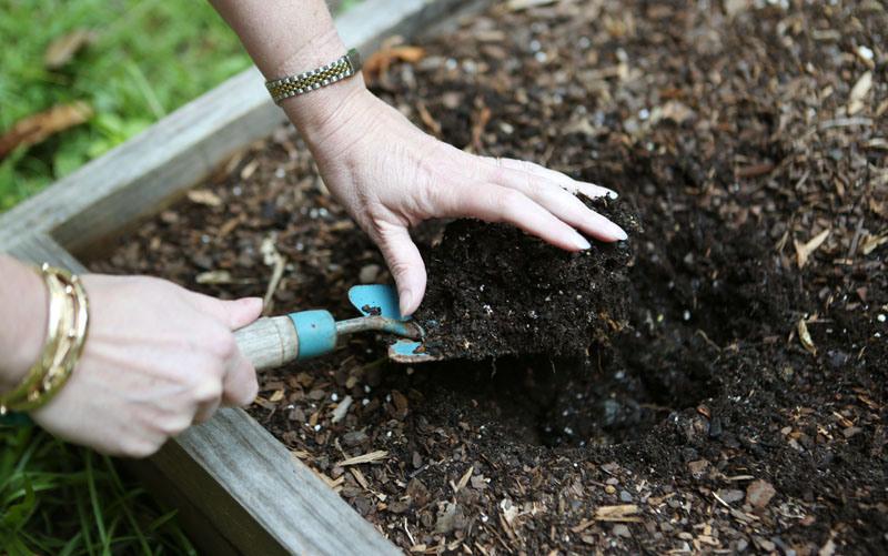 Подготовка грядок под рассаду клубники