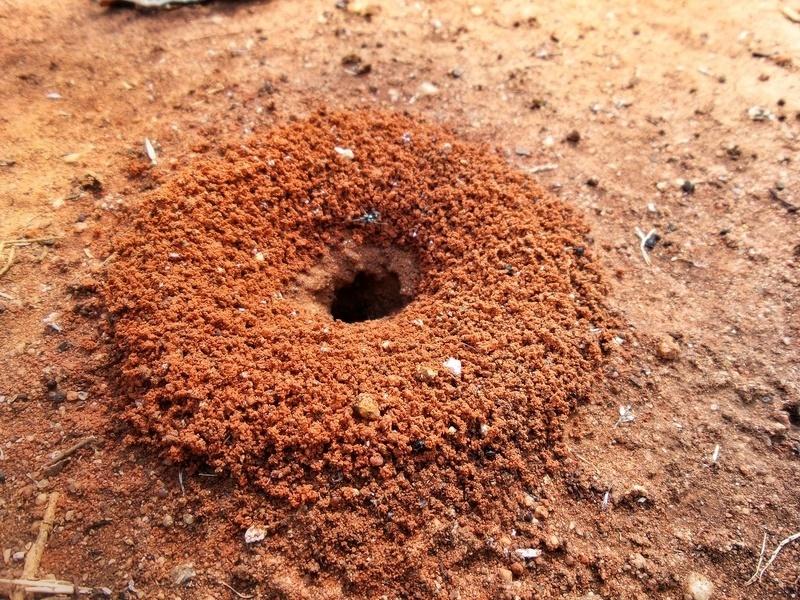 Основной вход в муравейник: расширяем штырем и заливаем настой