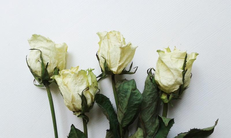 Высушенные розы
