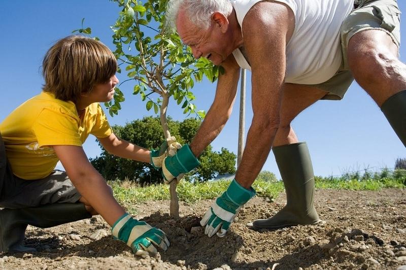 Работы по посадке деревьев и кустарников