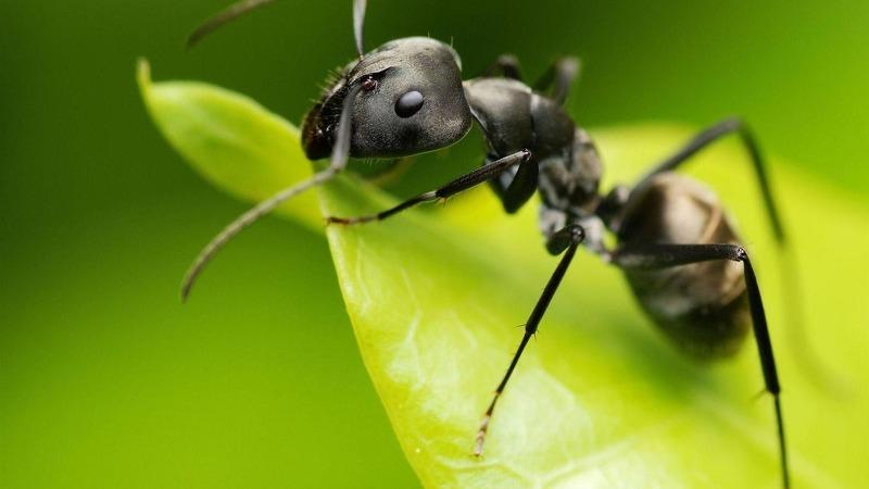 Борьба с муравьями на даче народными средствами