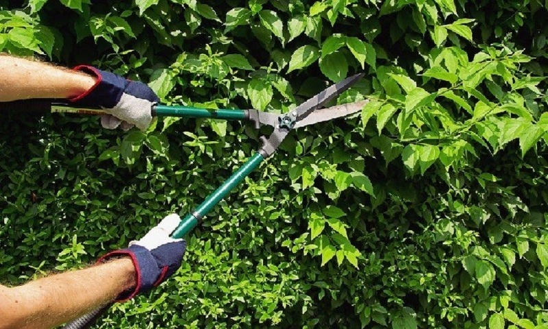 Стрижка и обрезка живой изгороди из кустарников