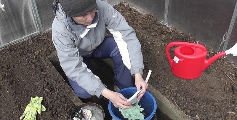 Обработка теплицы медным купоросом до посадки баклажан