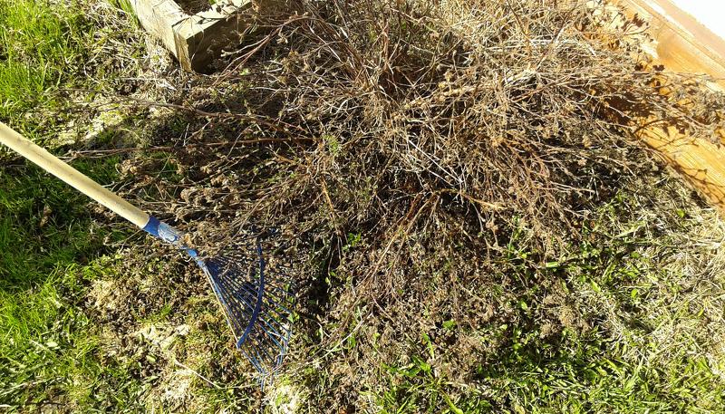 Весенняя уборка старой листвы и травы