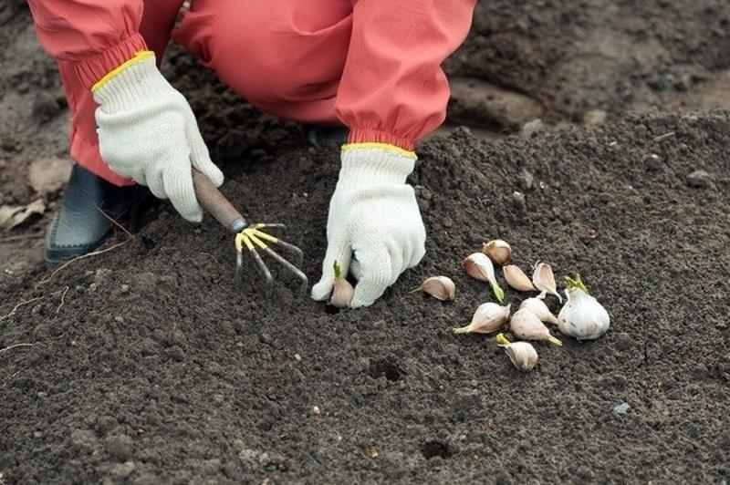 остановиться Стамбуле обработка почвы после чеснока Пожаловаться Отзывы