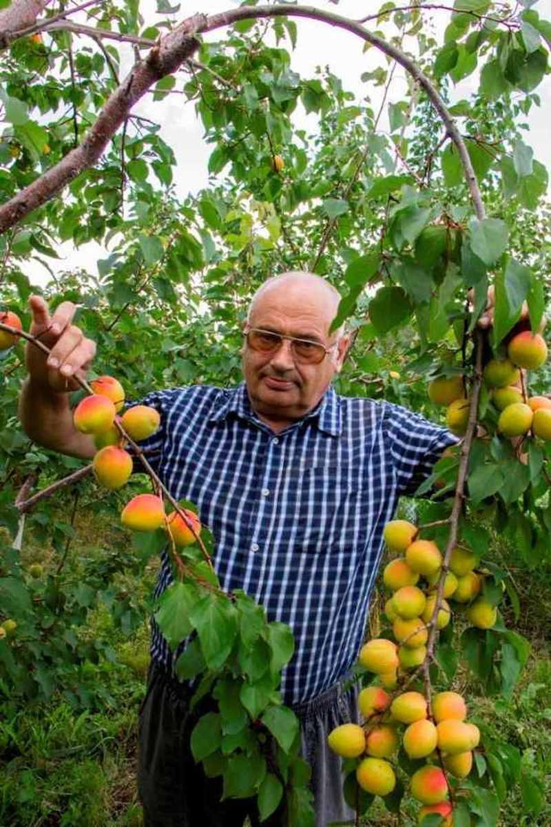 Выбор и покупка саженцев плодовых деревьев: как избежать ошибок