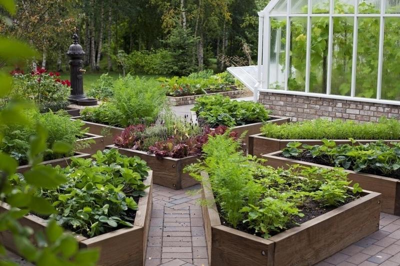 современный огород на загородном участке фото