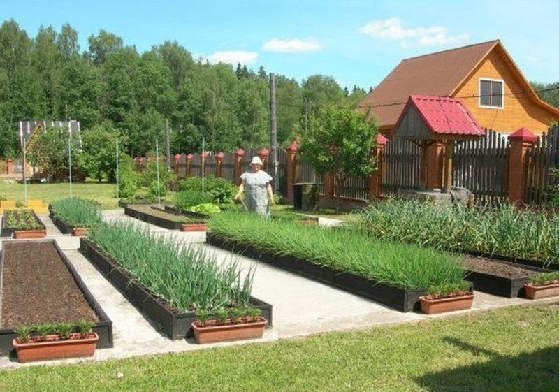 Классические прямоугольные гряды огорода в регулярном стиле