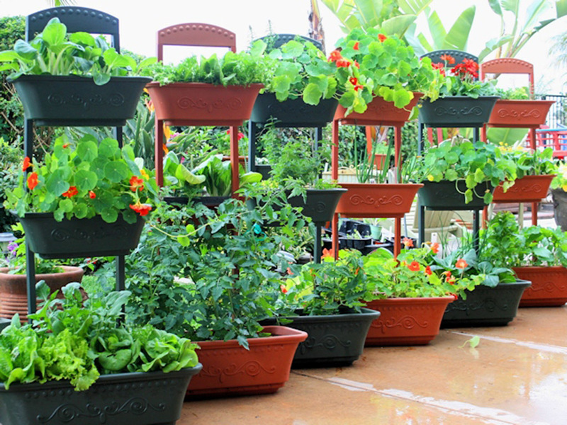 Вариант оформления многоэтажного контейнерного огорода
