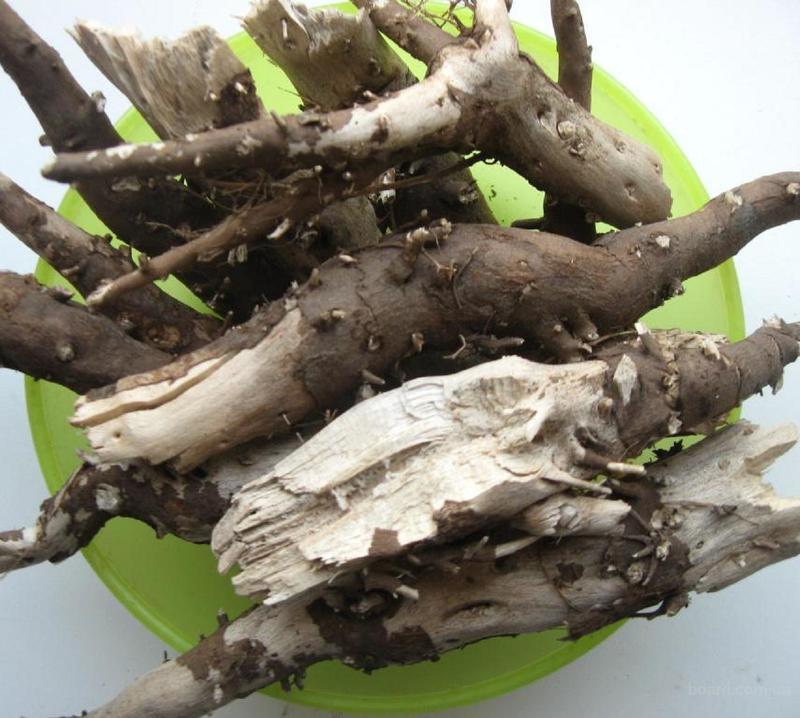 Как заварить корень подсолнуха для лечения суставов