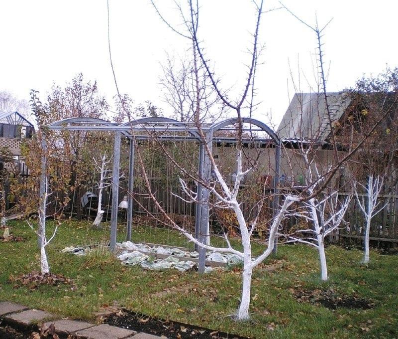 Уход за яблоней весной в собственном саду