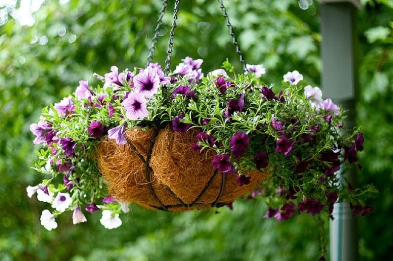Деревянный поддон для вертикального выращивания петунии
